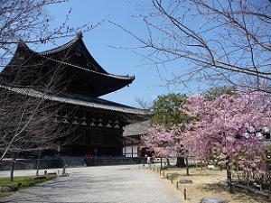 金堂と河津桜