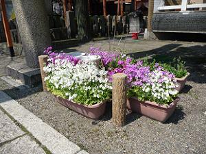 境内で育てられている花