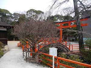 下鴨神社の光琳の梅