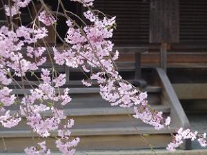 枝の先まで付いた花