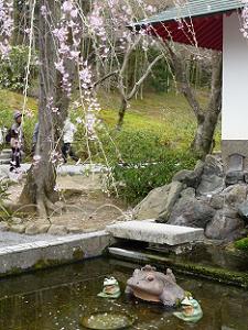 カエルと枝垂れ桜