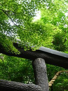 黒木の鳥居と新緑