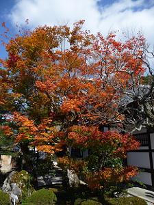 庭園入口の紅葉