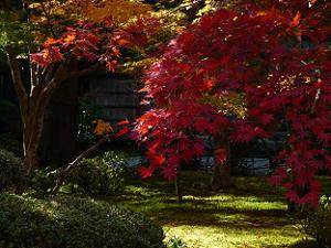 真っ赤な葉
