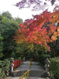 反対側の石段の紅葉
