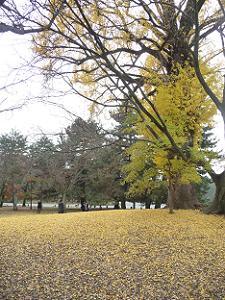 金色の芝生