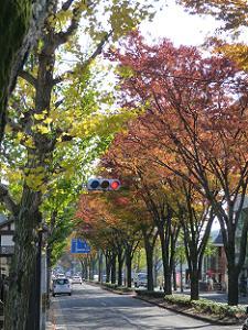 バス停一乗寺下り松近くの街路樹