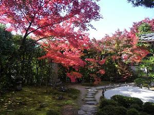 日差しを浴びた紅葉