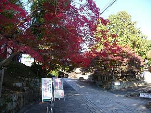 極楽橋近くの紅葉