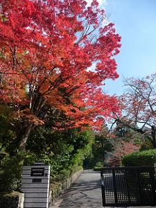 京都薬用植物園の紅葉
