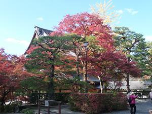 法堂の後ろの紅葉