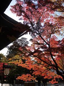 逆光で見る紅葉