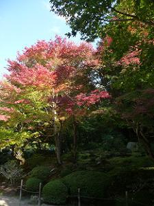 庭園奥の紅葉