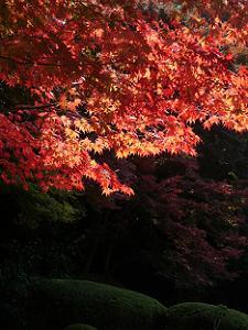 嘯月楼付近の紅葉