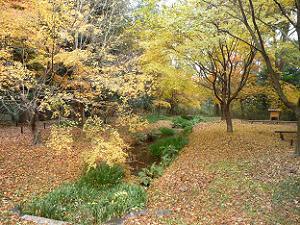 奈良の小川付近