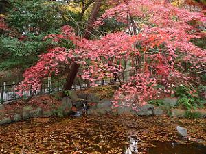 龍澤池の紅葉