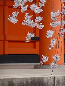 枝垂れ桜と朱色の門