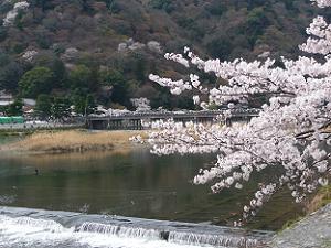 ソメイヨシノと渡月橋