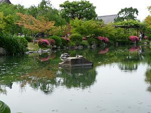 初夏の瓢箪池