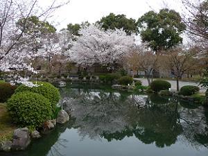 春の瓢箪池