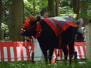 休憩する牛