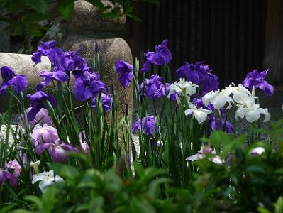 群生する紫色と白色の花
