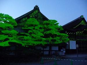 緑の光線を受けた松