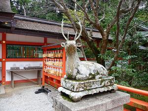 大原野神社の鹿
