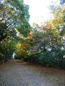 京都御苑と梨木神社の間の道