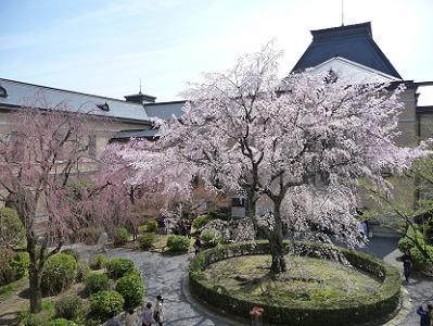 2階から見た祇園しだれ桜