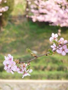 枝先に咲く花