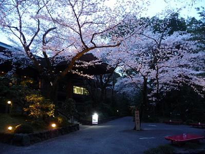 清峯殿前のソメイヨシノ