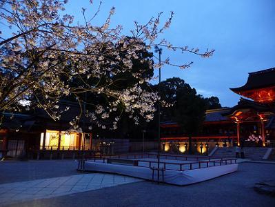 本殿と夜桜
