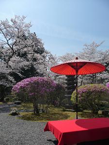 青空の下で見る桜