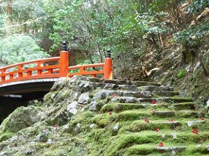 橋と苔と散椿