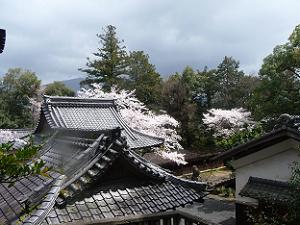 岩倉陵からの眺め
