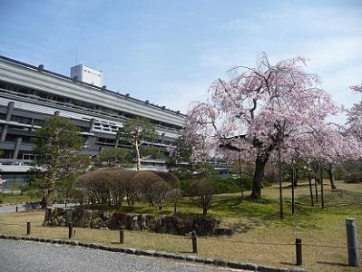 京都国際会館と枝垂れ桜