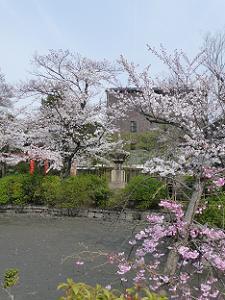 華やかな池の周囲