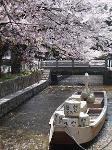 高瀬舟とソメイヨシノ