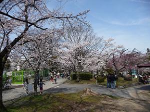 桜色の公園内