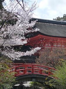 桜と輪橋と楼門