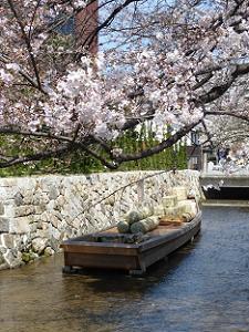 桜と高瀬舟