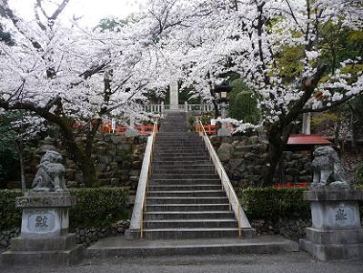 石段下の満開の桜