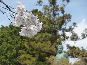 桜とマキノ省三