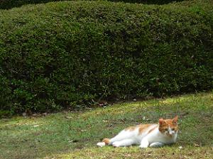 芝生で寝転ぶネコ