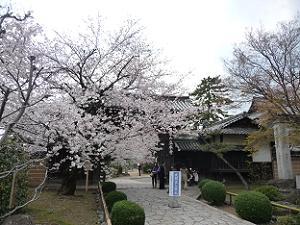 春の立本寺