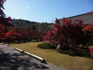 宸殿付近の紅葉