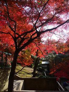 山上の入り口付近の紅葉