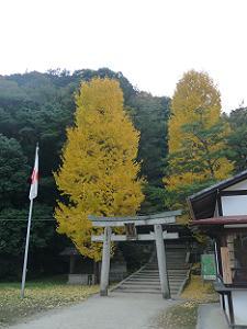 高良神社のイチョウ