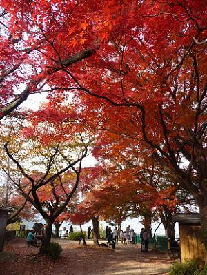 展望台の入り口付近の紅葉
